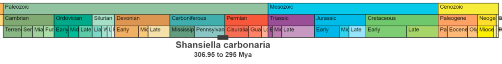 Shansiella carbonaria temporal range. 306.95 to 295 million years ago.