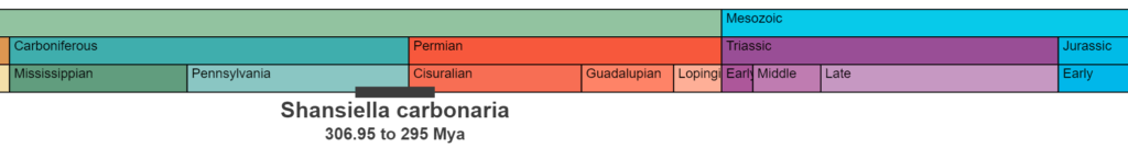 Detailed temporal range for the specimen showing Carboniferous through Jurassic.