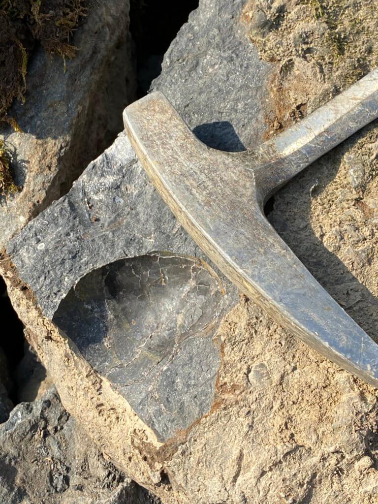 Fossil shell mold left from specimen