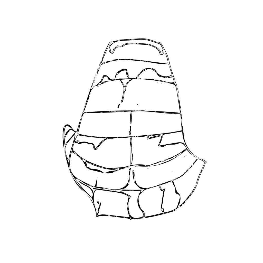 Line sketch of solenochilus