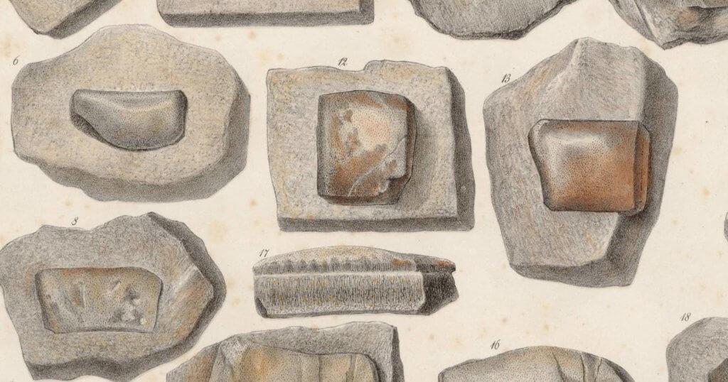 Psammodus Porosus