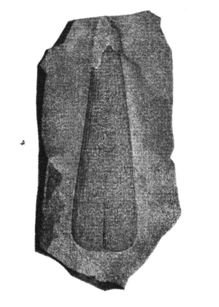 Pinna prisca, Taf. IV, Figure 4. 1839.