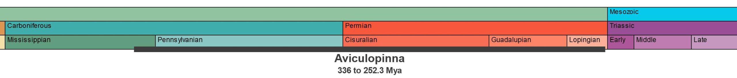 Temporal range of Aviculopinna.
