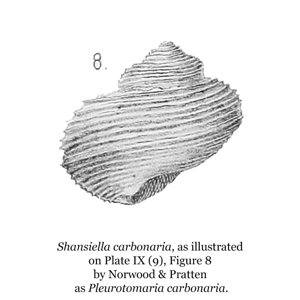 Shansiella carbonaria, as illustrated in Plate IX (9), Figure 8 by Norwood & Pratten as Pleurotomaria carbonaria.