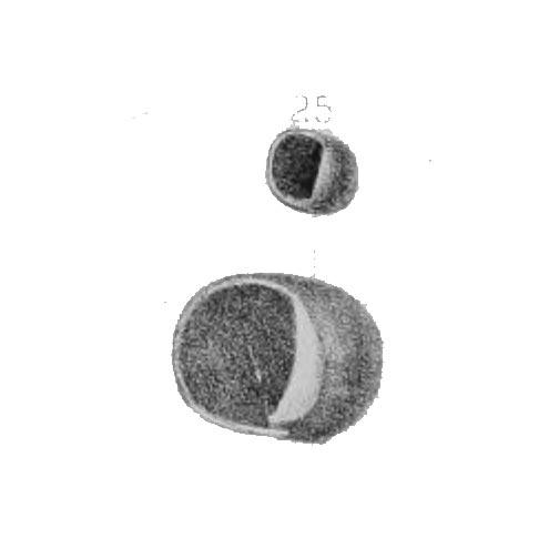 Naticopsis neritoides, Plate 5, Figure 25